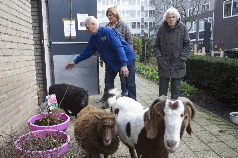 Kerststal Pennemes met dieren en vrijwilliger Van Os