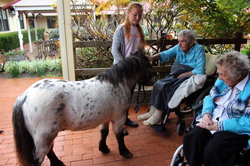 Pony bezoekt ouderen in verpleeghuis
