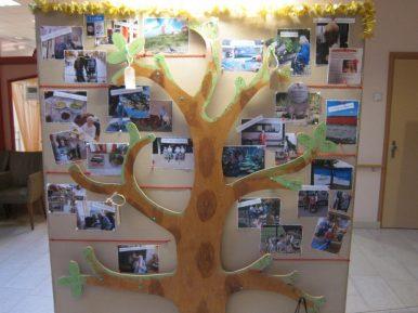 Afbeelding bij 'Wensboom groot succes bij Zorggroep Reinalda'