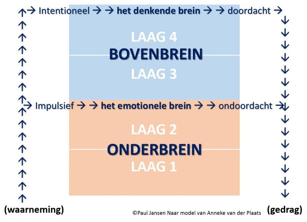 Functielagen brein