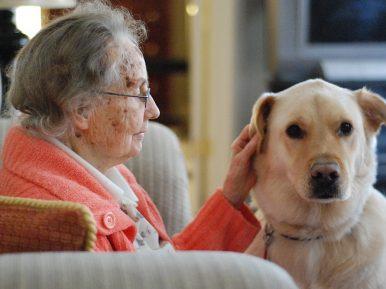Afbeelding bij 'Dierendag: dieren in het verpleeghuis'