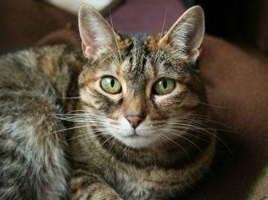 Afbeelding bij 'Else (verzorgende SVRZ): De Ter Schorre 'parttime' huiskat'