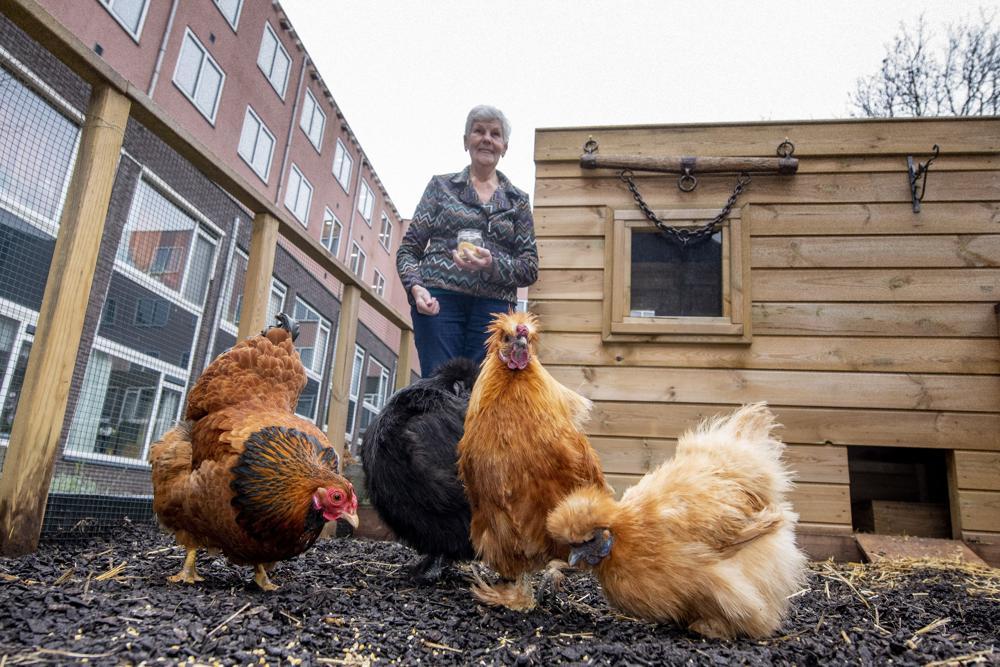bewoonster Pennemes met kippen