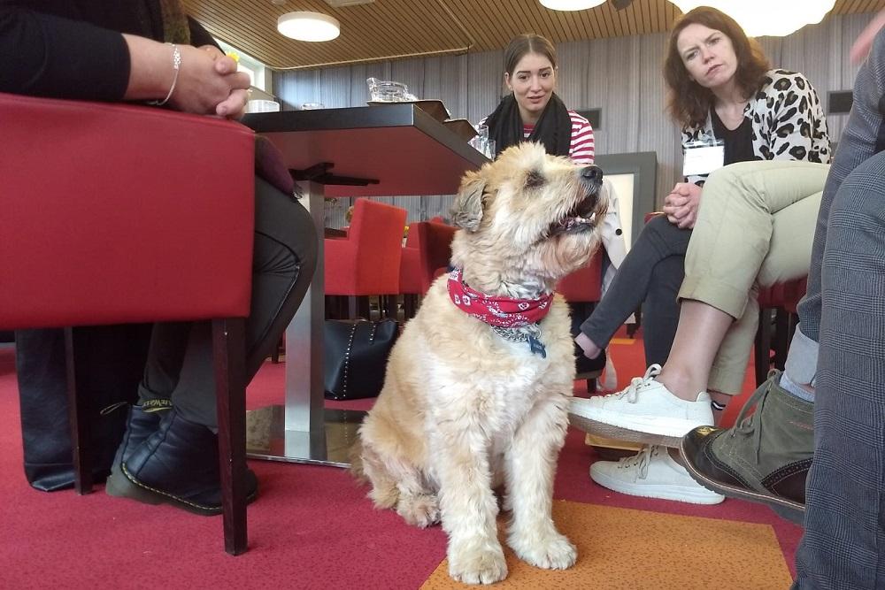 Themabijeenkomst Azora hond