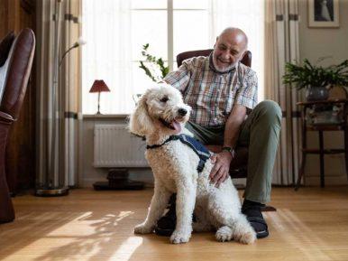 Afbeelding bij 'Contacthonden voor mensen met dementie: 'Er zijn alleen maar voordelen&#82..'