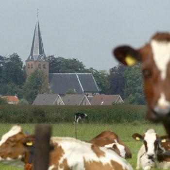 Afbeelding bij 'Regio Zuid-Hollandse Eilanden'