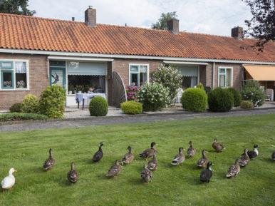 Afbeelding bij 'Regio Zeeland'