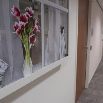 Afbeelding bij 'Brede coalitie 'De Zorgzame Buurt' maakt ouderenzorg in Stede Broec klaar voor 2..'